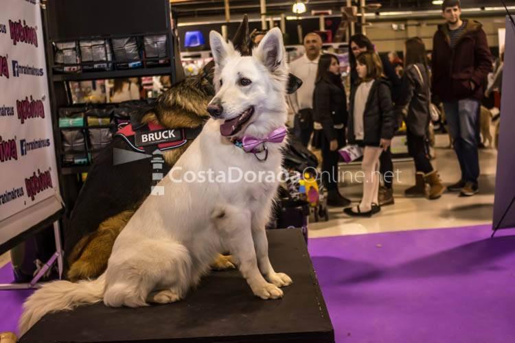 Bestial, Salón de la mascota 2017; Feria Bestial VIII Edición