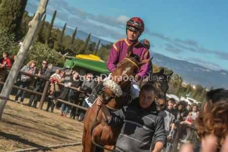 Vilaseca-carreras-de-caballos-sant-antonio-2018-8