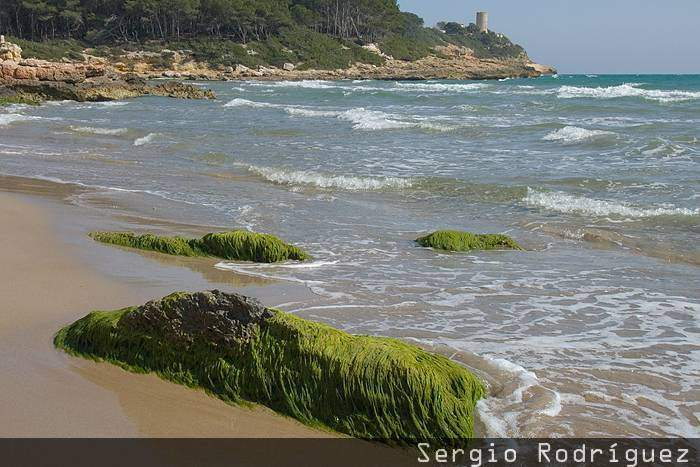 Playas de Tarragona. Playa de la Roca Plana