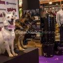 reus eventos, Feria Bestial Reus 2017