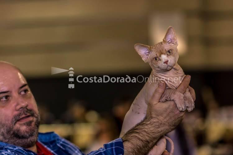 VIII Edición de Bestial, Salón de la Mascota; Feria Bestial Reus 2017